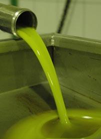1.800kg Oliven wollen zu Villa Maria – Bio-Olivenöl Nativ Extra verpresst werden